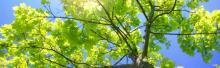 cropped-treessun.jpg