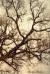 #maple tree #trees #érable #arbre