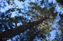 #trees #arbres